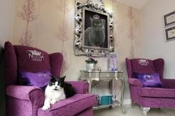 luxury-fancy-design-hotel-cat-hotel_6