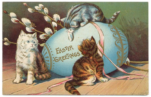 easter-cute-cat-wallpapers-5